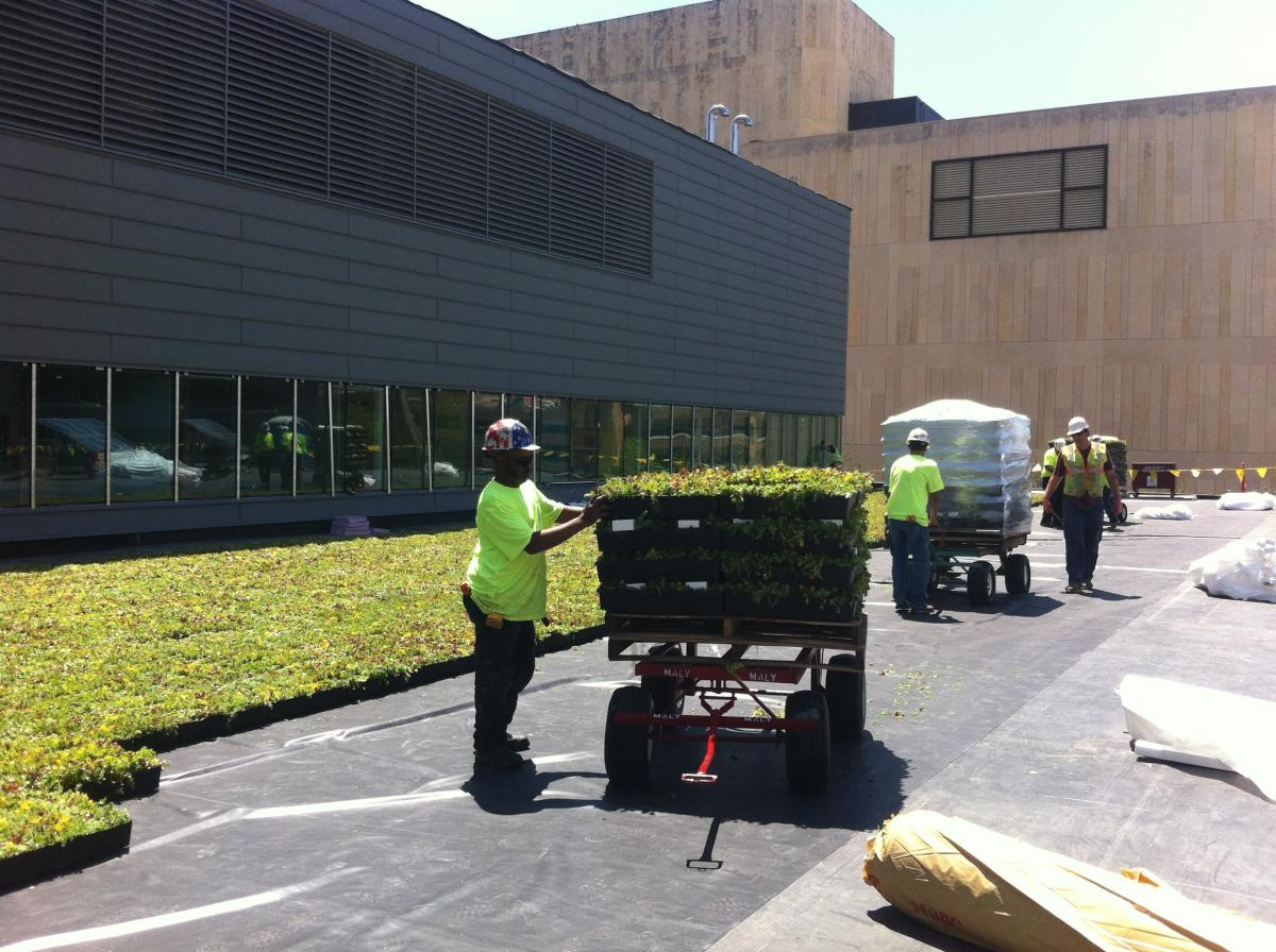 Construction of Central Library's green roof