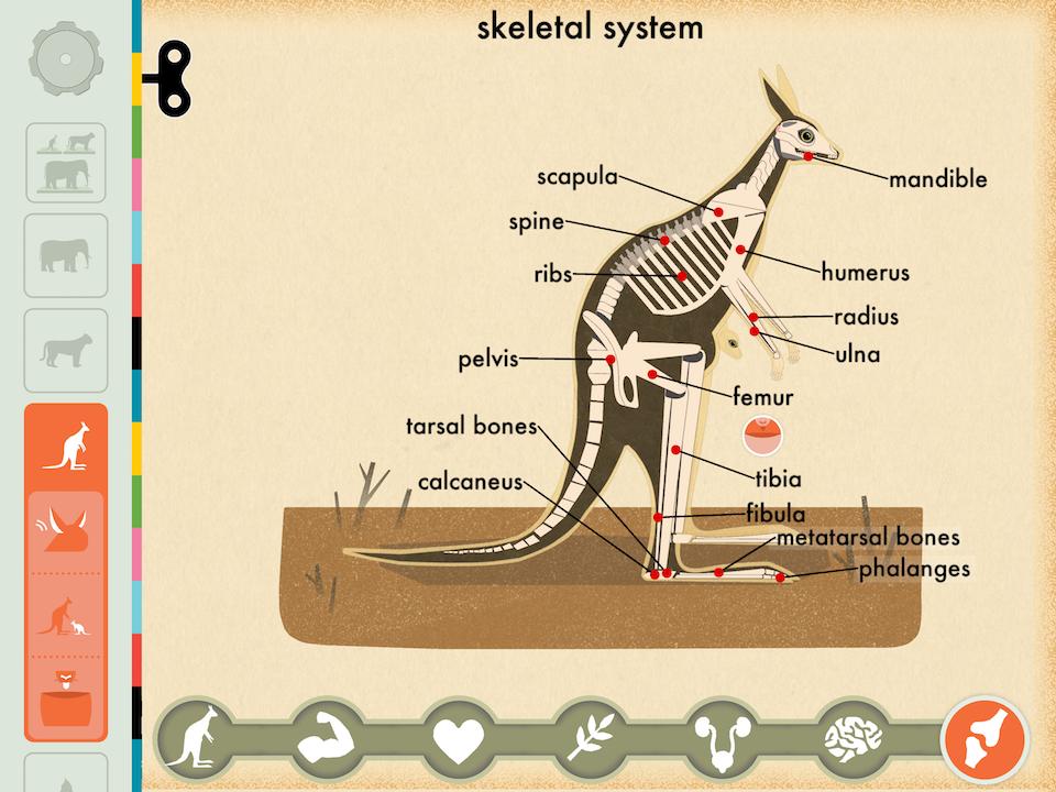 screenshot from Mammals app