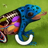 blue frog with a cutaway body revealing inner anatomy